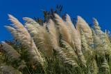 Najpiękniejsze trawy ozdobne do ogrodu. Które z nich wybrać i jak je pielęgnować? Najważniejsze informacje [PIELĘGNACJA, SADZENIE, RODZAJE]