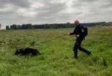 St. asp. Krzysztof Lemański jest przewodnikiem psa policyjnego. Spełniły się jego marzenia [zdjęcia]