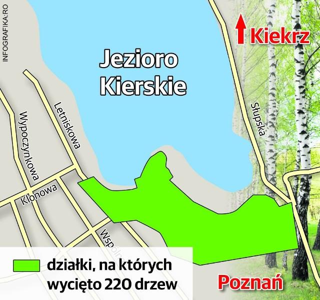 Przy Jeziorze Kierskim wycięto 220 drzew. Ekolodzy się burzą. Wydział Ochrony Środowiska rozkłada ręce: miejscowego planu wtedy nie było