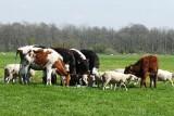 Wnioski o pomoc dla rolników dotkniętych COVID-19 tylko do 30 września. Poszkodowani muszą się spieszyć
