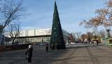Pierwsze choinki pojawiają się w centrum Zielonej Góry. Na Placu Bohaterów już stoi ogromne, przystrojone drzewko