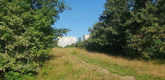 """""""Utrzymanie zieleni w mieście generuje ogromne koszty, podczas gdy pozwalając przyrodzie robić swoje możemy uzyskać porównywalne korzyści"""" – to wniosek ze wspólnych badań Uniwersytetu Łódzkiego (UŁ) oraz Szkoły Głównej Gospodarstwa Wiejskiego (SGGW) w Warszawie. Na tym nie koniec: """"gdy pozwolimy na jej spontaniczny rozwój"""" – czytamy o miejskiej przyrodzie w komunikacie SGGW – """"dostarczy nam korzyści porównywalnych do pielęgnowanych parków, a nierzadko nawet większych"""". Tym samym nauka potwierdziła, że ogół mieszkańców Łodzi jest mądrzejszy od jej samorządowców. W 2017 r. magistrat forsował uporządkowanie terenu dawnego poligonu na Brusie przez wydzielenie z niego parku (i fragmentu na zabudową rezydencjonalną). Jako alternatywę Urząd Miasta Łodzi (UMŁ) wskazał """"chynchy i chaszcze"""", lecz właśnie na """"chynchy i chaszcze"""" zdecydowali się łodzianie. Inne """"chaszcze"""", czyli Zieloną Ostoję w otulinie Lasu Łagiewnickiego, mieszkańcy obronili wiosną 2021 r. Na zdjęciu dzika zieleń na Widzewie-Wschodzie >>> Czytaj dalej przy kolejnej ilustracji >>> ..."""