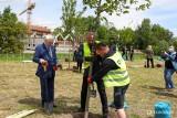 To się nazywa rozmach. W zabetonowanym Krakowie przybyło... 25 drzew