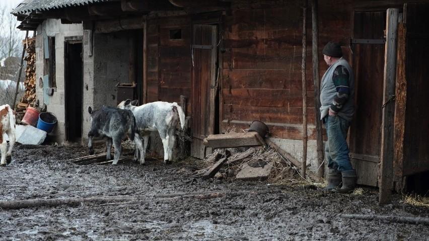 Program Rolnicy Podlasie. Jak na razie nie wiadomo, czy w...
