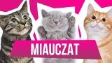 """WOŚP 2019. Licytuj wizytę na planie programu """"MiauCzat""""!"""