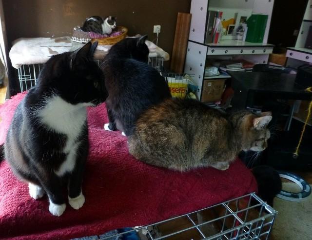 W przytulisku prowadzonym przez fundację aktualnie znajduje się 28 kotów. Czekają na nowe domy.