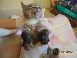 Poturbowana kotka nie była celowo ciągnięta za samochodem? Policja prostuje informację, to był wypadek ZDJĘCIA