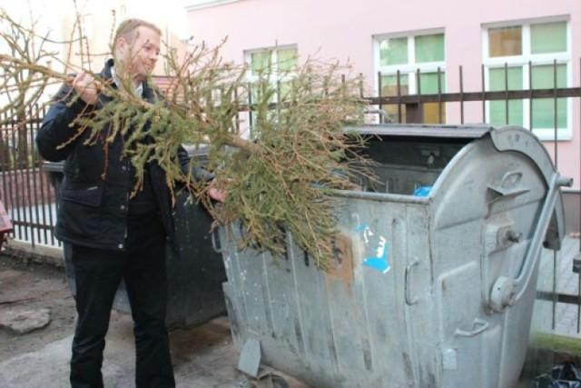 Problem z choinkami widać w wielu miastach. Nowa Sól chce się ustrzec przed nawałem uschniętych drzewek.