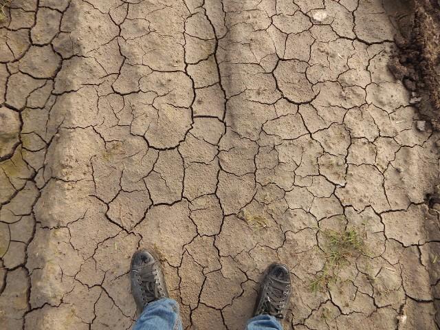 Specustawa ma zapobiegać zarówno skutkom suszy, jak i ulewnych deszczów.