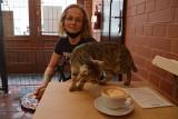 Zielona Góra. Kocia kawiarnia znów działa. Lucek i piękne kotki czekają na was!