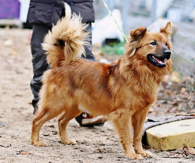 Przystanek na Cztery Łapy w Makowie Mazowieckim. Coraz więcej psów, ale miasto nie chce wybudować wybiegów. Powód?