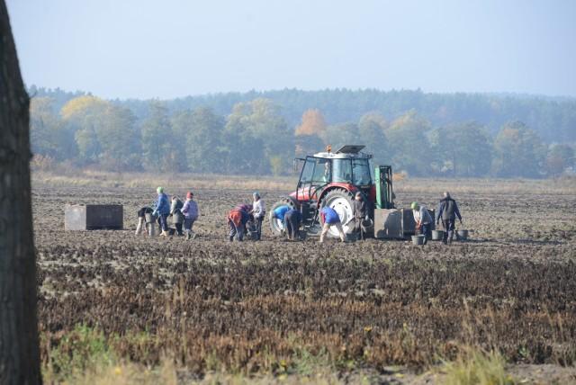Rolnictwo: W 2015 r. o 8,1 proc. mniej wypadków niż rok wcześniejWskaźnik wypadkowości w rolnictwie indywidualnym w 2015 roku wyniósł 10,3 wypadków na 1000 ubezpieczonych
