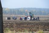 Rolnictwo: W 2015 r. o 8,1 proc. mniej wypadków niż rok wcześniej