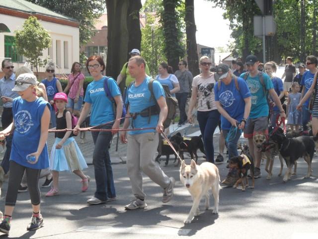 Gliwicki spacer szczęścia z psami ze schroniska dla bezdomnych zwierząt