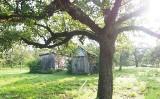 Stare drzewa owocowe w ogrodzie - jak je uratować i odmłodzić