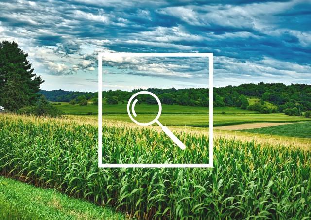 Platforma Sygnalizacji Agrofagów podpowiada, czy i jakie zabiegi zastosować w uprawach.