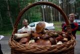 Grzyby na Dolnym Śląsku 2019. Koniec września to czas dla grzybiarzy! Gdzie jechać na grzyby? (LOKALIZACJE, MAPY WYSTĘPOWANIA)