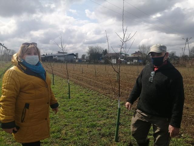 Pomysł posadzenia przy szkole dawnych odmian jabłoni wyszedł od Alicji Szatan, dyrektora placówki, którą wspiera nauczyciela produkcji sadowniczej Stanisław Domagalski. Na pierwszym tle także kilka odmian śliw.