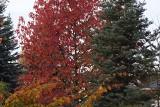 Egzotyczne drzewa i krzewy, rosnące z powodzeniem w ogrodach naszego regionu. Spektakularny efekt ocieplenia klimatu