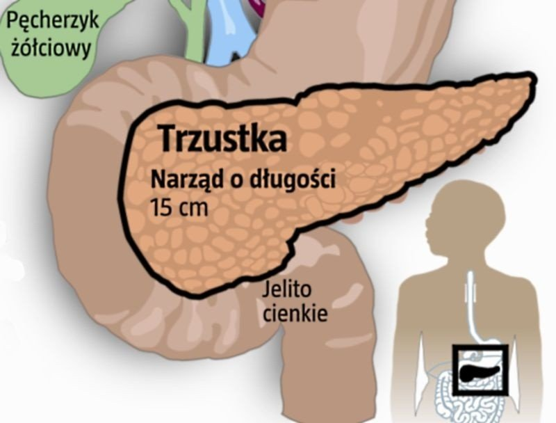 Trzustka Fabryka Enzymow I Hormonow Nowa Trybuna Opolska