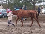 Konie miały być głodzone, a mimo to używane do jazdy. Właścicielka ośrodka w Mirotkach zaprzecza