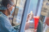 Szczepionka przeciw COVID-19 na Pomorzu. 27.12.2020 pierwsze dawki trafią do czterech szpitali w województwie pomorskim