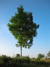 Mężczyzna zginął ścinając drzewo na własnej posesji