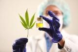 Medyczna marihuana i lecznicze produkty z konopi – terapia ostatniej szansy w chorobach przewlekłych. Wkrótce decyzja ws. legalizacji