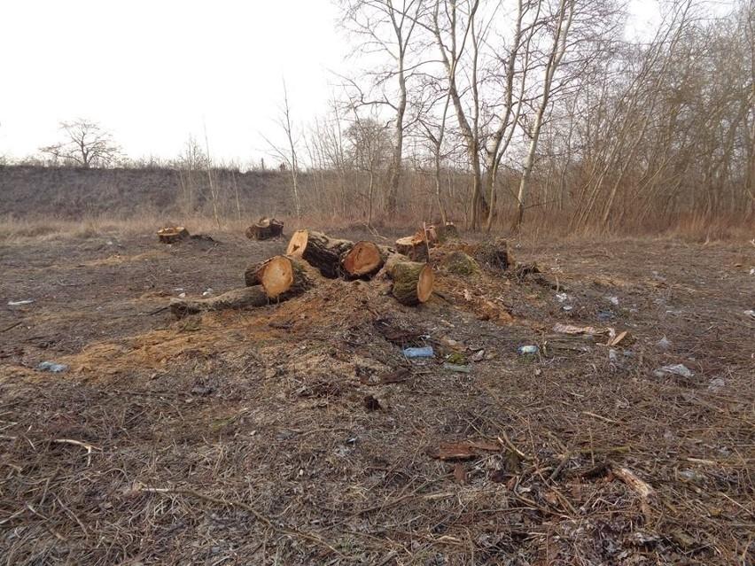 Ponad 30 drzew i krzewów zostało wyciętych w południowym...