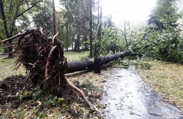 Połamane i wyrwane drzewa wyrządziły sporo szkód m.in. w Rzeszowie.