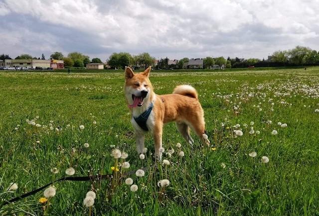 1 sierpnia obchodzony jest Światowy Dzień Psa.