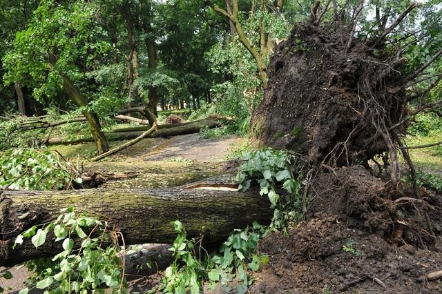 Nawałnica w TyczynieW parku od samego rana można spotkać mieszkańców, którzy oglądają szkody, jakie wyrządziła nawałnica.
