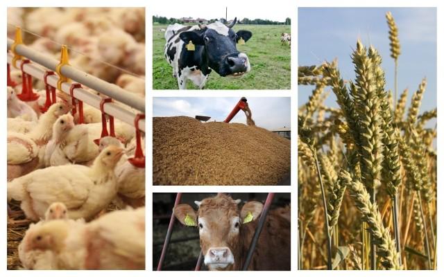 Zespół ekspertów  spróbował przewidzieć ile gospodarze mogą otrzymywać za artykuły rolno-spożywcze w czerwcu i we wrześniu