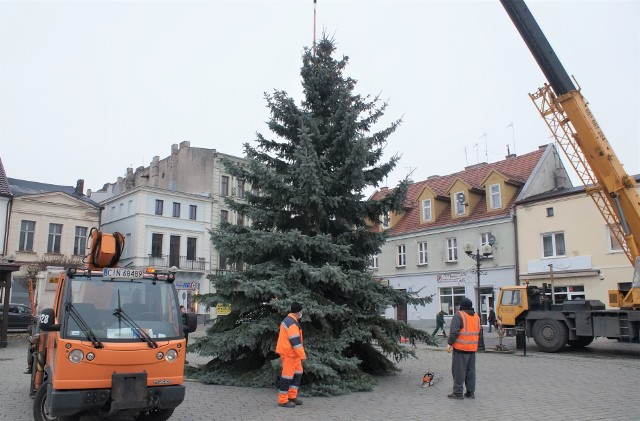 Na inowrocławskim Rynku 26 listopada służby komunalne ustawiły bożonarodzeniową choinkę