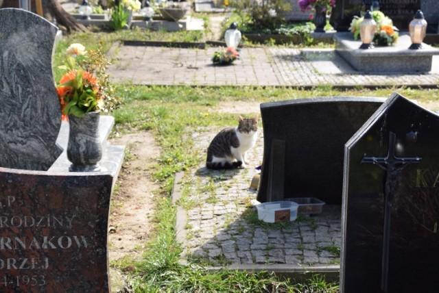 Koty na cmentarzu w Pruszczu Gdańskim. Leżą na pomnikach, sikają w rabaty. – Czy to dobre miejsce? – pyta Czytelnik