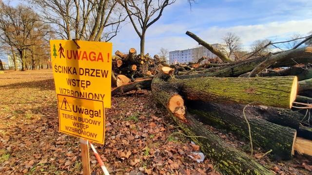 Władze Gorzowa szukają firmy, która chciałaby odkupić od miasta drewno z wycinki drzew przy ulicy Walczaka.