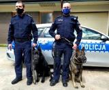Demon i Niko - tych policyjnych psów powinni bać się wszyscy przestępcy