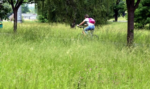 Skwery i łąki Parku Śląskiego. Jak widać na zdjęciach, w Parku Śląskim ograniczono koszenie. Zobacz kolejne zdjęcia/plansze. Przesuwaj zdjęcia w prawo - naciśnij strzałkę lub przycisk NASTĘPNE