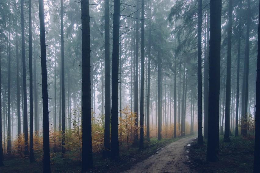 Lasy Państwowe zamierzają walczyć ze szkodnikami drzew. Od 6...