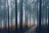 Zabiegi agrolotnicze w lubuskich lasach. Sprawdź, gdzie będą robione opryski