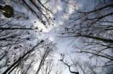 Kielce. Miasto tłumaczy się z wycinki drzew w Parku Miejskim