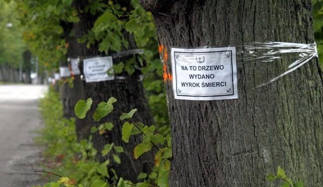 Lipy w Mielenku w jedną październikową noc 2012 roku oklejone zostały nekrologami z widoczną na zdjęciu treścią. Nie poszły pod topór, a kilka dni temu wojewódzki konserwator zabytków uznał złożoną z nich aleję za pomnik przyrody. Taki jest efekt protestujących przeciwko wycince tych lip.