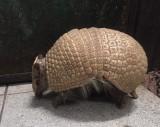 Zmiany w toruńskim ogrodzie: jedne zwierzęta pojechały w świat, inne zamieszkały w zoo na Bydgoskim Przedmieściu