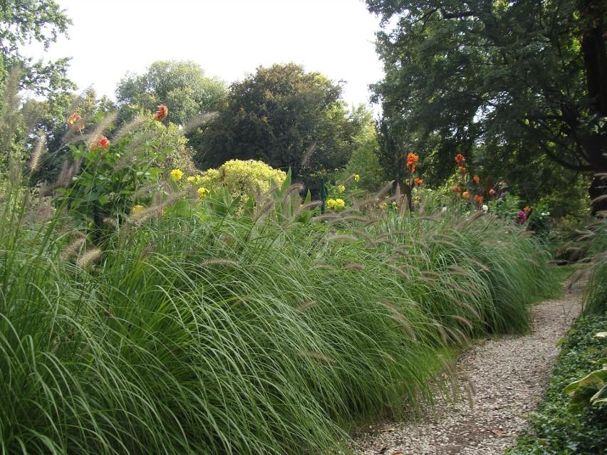 Trawy ozdobne szturmem zdobywają nasze ogrody. Zobacz, jakie...