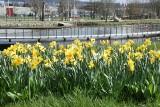 Ogród Botaniczny w Kielcach zaprasza po zimowej przerwie. Przez weekend wielkie świętowanie [WIDEO, ZDJĘCIA]