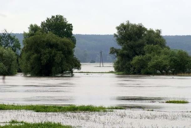 Rolnicy muszą pisemnie poinformować kierownika biura powiatowego ARiMR, o tym że ich uprawy zostały zniszcone przez powódź fot. Tomek (galeria internautów GL)