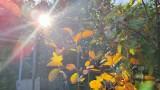 Ogródki działkowe w Czeladzi mienią się jesiennymi kolorami. Zobaczcie