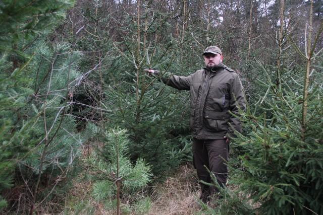 Leśniczy Łukasz Dałkowski zachęca do kupna drzewek.