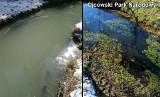 Kontrolowane problemy z oczyszczalnią w gminie Sułoszowa. Mieszkańcy interweniowali u posłanki, a ona u inspektorów