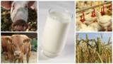 Zobacz ile rolnicy powinni dostawać za płody rolne w czerwcu i wrześniu